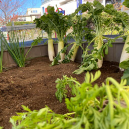お野菜収穫体験